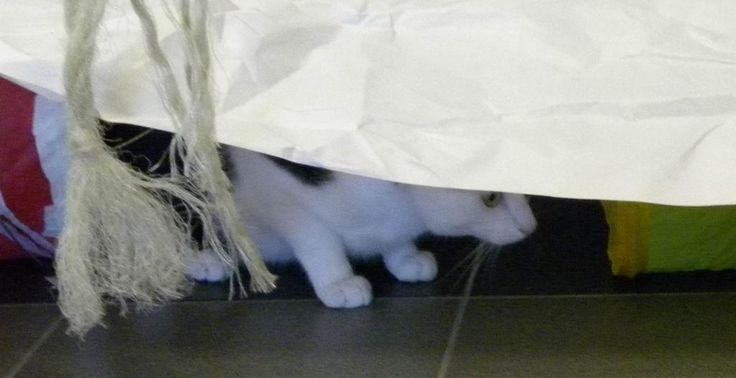 Nigel says I`ll hide and play under the paper and no one will know.