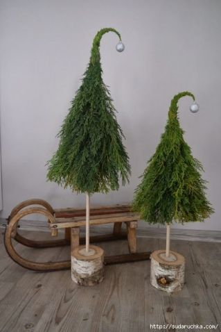 Seussian Christmas trees & wooden sled