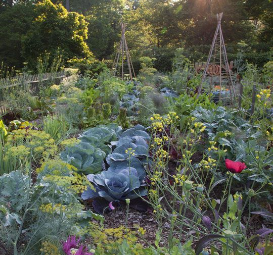 65 Best Potager Gardens Images On Pinterest: The Potager Images On Pinterest