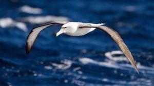 Nombres de aves marinas y otras caracteristicas
