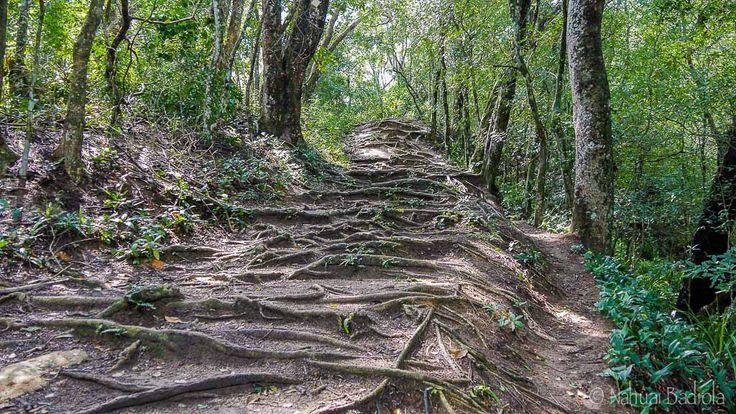 Camino hacia Playa Lopes Mendes, Ilha Grande