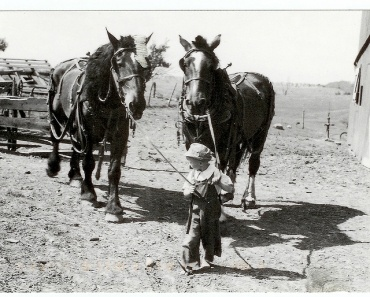 draft horses were usually very gentle with children. I was first put atop our draft horses when I was 3 years old,  grab a tuft of mane and hold on!