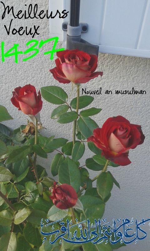 Nouvel an musulman - 1437 H�gire : Une bonne ann�e � toutes et tous !