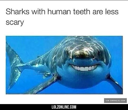 Shark Smiles#funny #lol #lolzonline