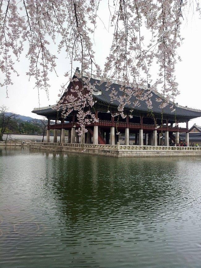 #Gyeongbokgung Palace in Spring, Seoul, Korea