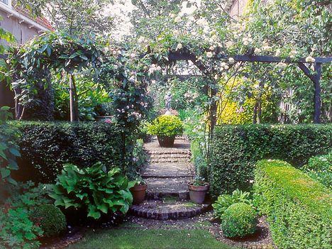 PhotiniaHecke Red Robin 1AHeckenpflanzen Garten
