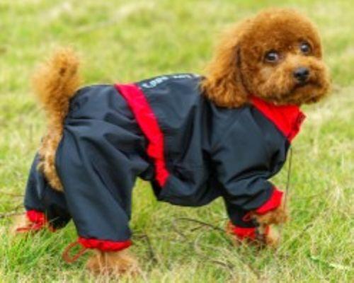 Fin regndress til de små og mellomstore hundene.Hundedressen er vannavvisende og gir god beskyttelse av hunden i sølevær. Regndressen er sort med røde kanter. Den har snøring rundt bena og rundt magen. Dressen lukkes med trykknapper og har dobbelt sett i halsen og ved lysken for ekstra fleksibilitet. Den har en bord på ryggen med reflekstekst for ekstra synlighet i mørket.Størrelsestabell:StørrelseRygglengdeBrystomkrets8 - XS...