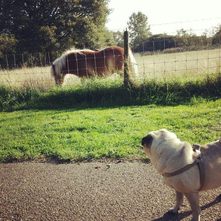 That is one strange pug