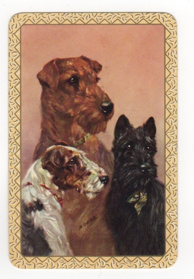 PLAYING CARDS SINGLE CARD Vintage Signed TERRIER Dog Dogs Fox Scottie Wire Haire FOR SALE • £0.99 • See Photos! Money Back Guarantee. A single vintage playing card, one (1) card, not a pack.I sell only genuine antique (pre-1920) & vintage (1920-1980) playing cards ... no digitally reproduced or laser printed cards. The 352059290458