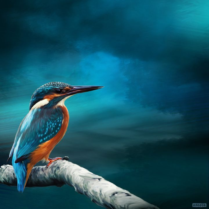 Kingfisher on Watch - Julian Hindson