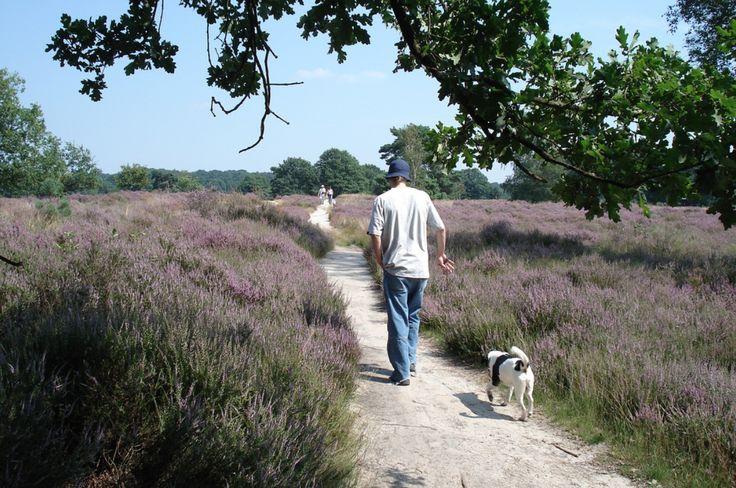 Nationaal Park de Meinweg is een van de mooiste wandelgebieden van Nederland.
