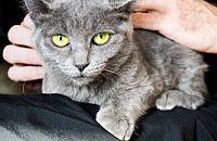 Caring for Kittens? A Vet Shares Her Tips From Kitten Season 2015