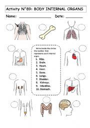 English worksheet: No 89:  BODY INTERNAL ORGANS