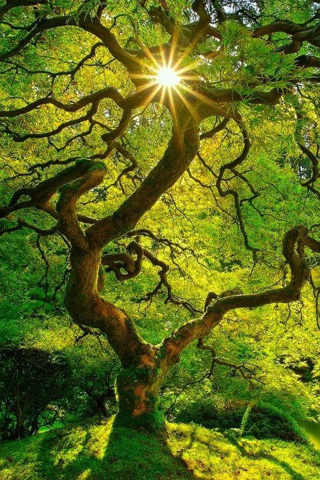 Majestic shine of green and glow, as sunshine embraces the tree below. Find warmth and understanding from the Divines loving hug. For the sun will shine through and lift you above. ~Jana
