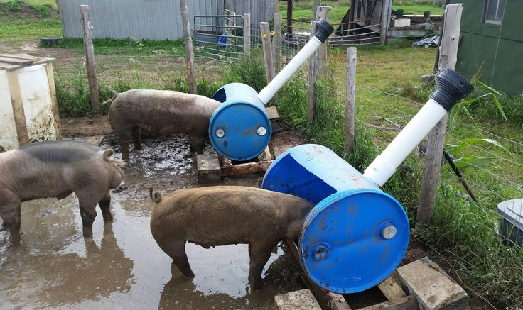 Made some pig feeders today so I can feed the pigs from outside the pen.