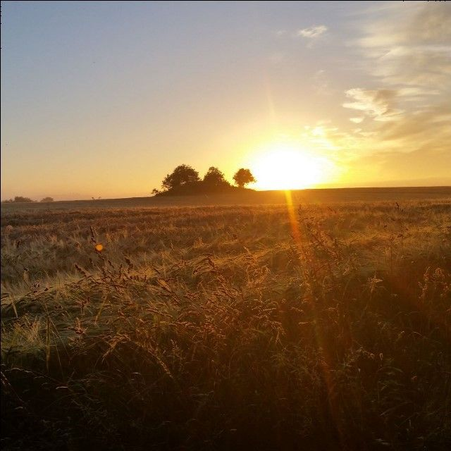 Et lille morgenfoto fra vores vandretur på hærvejen. Fotoet er taget ved Klokkeholm Møllesø kl 5 om morgenen #vgravhøje2014 #latergram