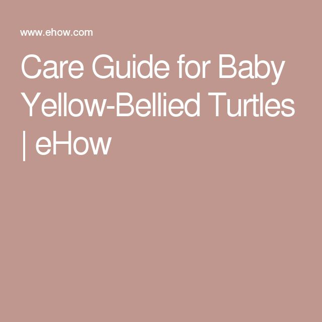 Care Guide for Baby Yellow-Bellied Turtles | eHow