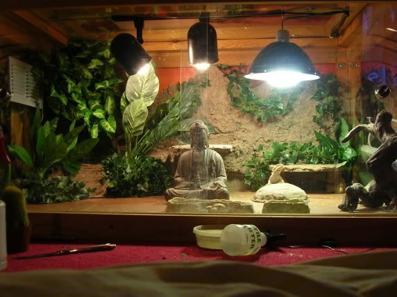 I need to get a buddha for Corelia's habitat :D!!!!   reptile tanks | Reptile Tanks Bearded Dragon | Reptile Tanks For Sale