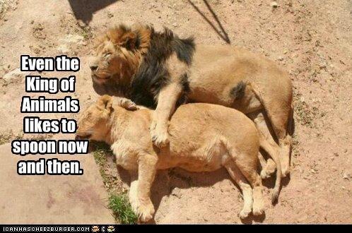 .: Big Cat, Animal Kingdom, Lion And Lioness, True Love, Lion Love, Naps Time, Funny Animal, Sweet Dreams, Bigcat