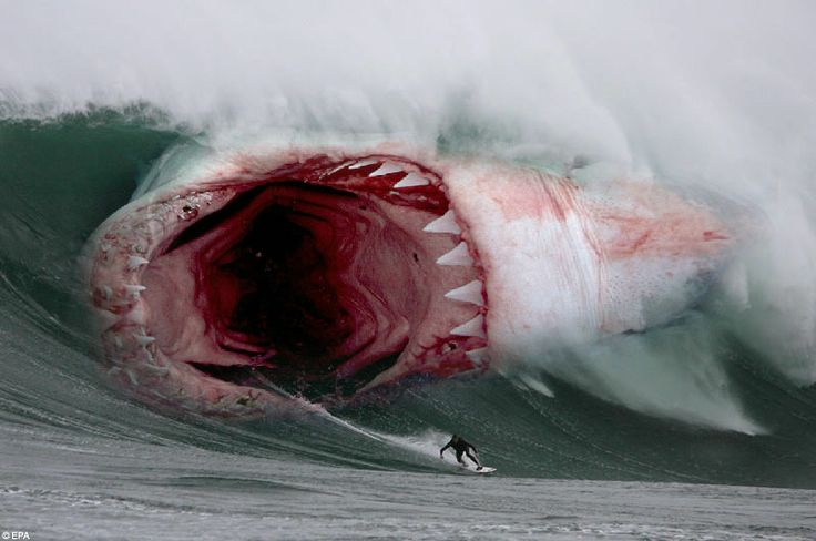 worlds biggest shark | Photoshoped by Raúl