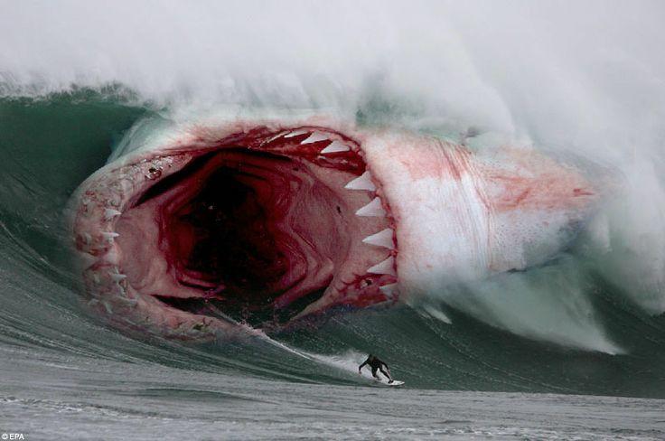 worlds biggest shark   Photoshoped by Raúl