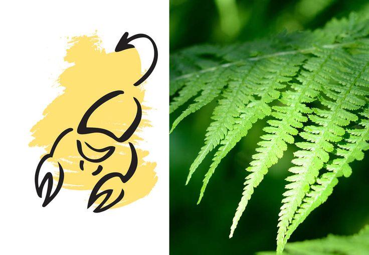 Scorpion : votre plante porte-bonheur