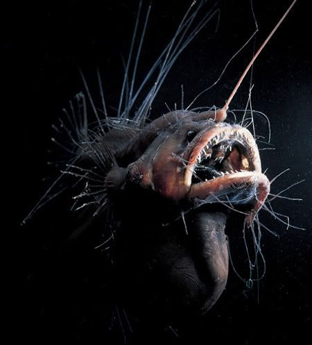 Many fish can change sex during the course of their lives. Others, especially rare deep-sea fish, have both male and female sex organs.: Deepsea Anglerfish, Fish Nom, Ocean Sea Lake Fish Boat, Coastal Fish, Angler Fish, Awesome Fish, Anglar Fish, Deep Sea Fish