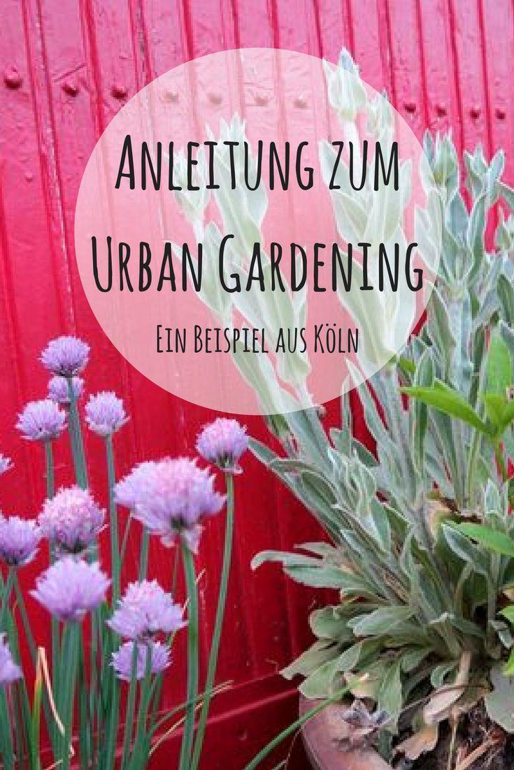 Ein Pilotprojekt zum Urban Gardening in Köln. Wie funktioniert Urban Gardening, was bietet es für Stadtbewohner und speziell für Familien. Der Gemeinschaftsgarten Neuland zeigt Stadtkindern wie Tomaten wachsen und wie sie selbst zum kleinen