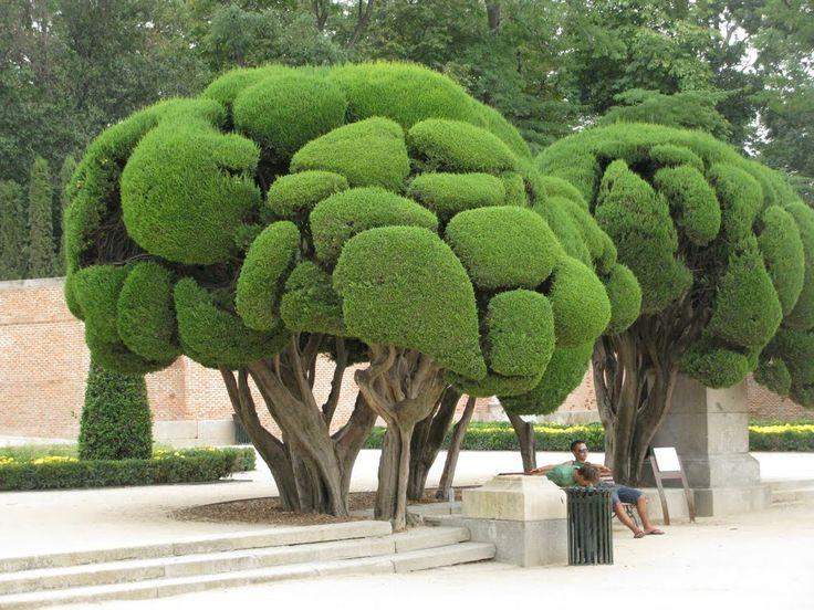 Sculpted trees parque del retiro madrid spain for Garden topiary trees
