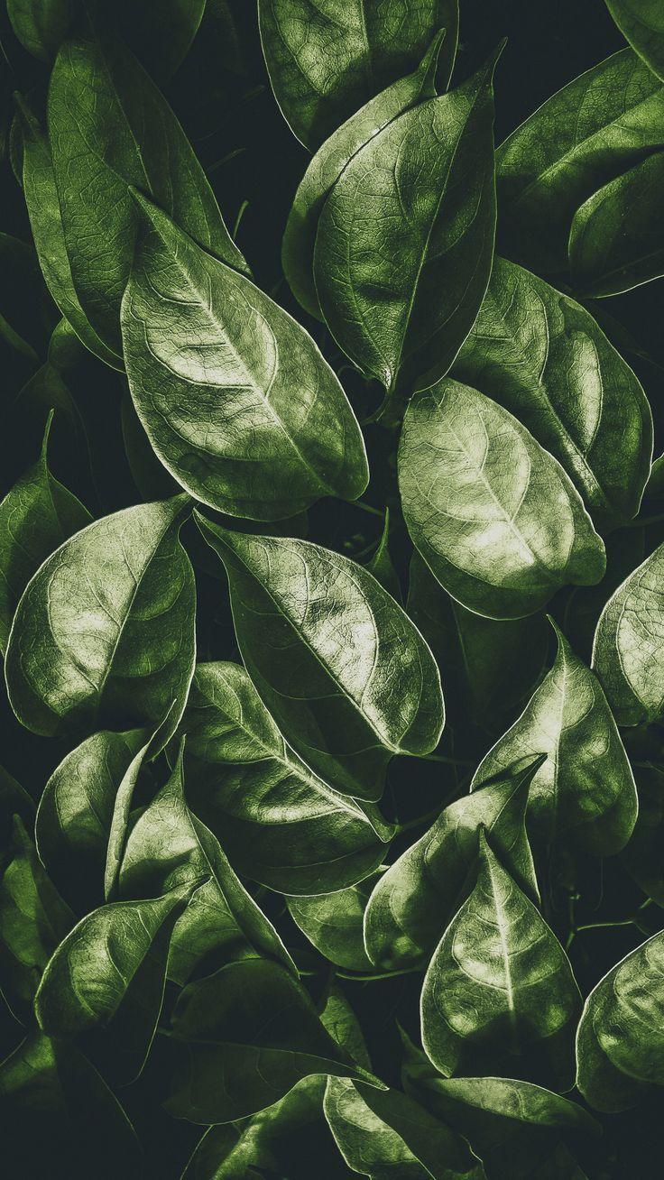Nature Leaves Plant Green Wallpapers Hd 4k Background For Android Zelenaya Priroda Pejzazhi Zelenye Fony