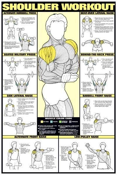 chart of weight lifting exercises: 18 best lifting images on pinterest exercise workouts physical