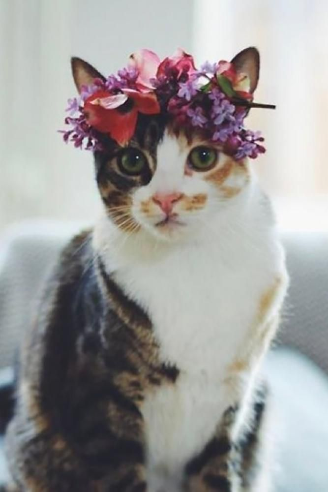 30 Beautiful Picture Concepts Of Marriage ceremony Pets For Your Album