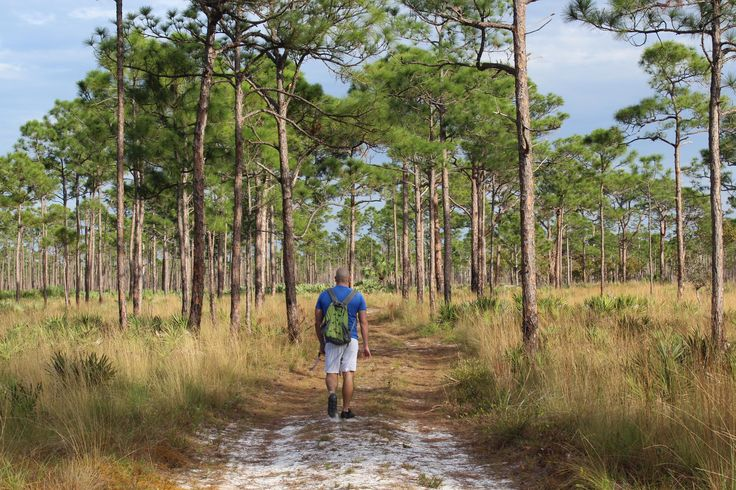 Jonathan Dickinson State Park Hobe Sound Florida. Winter in Florida. #hiking #camping #outdoors #nature #travel #backpacking #adventure #marmot #outdoor #mountains #photography