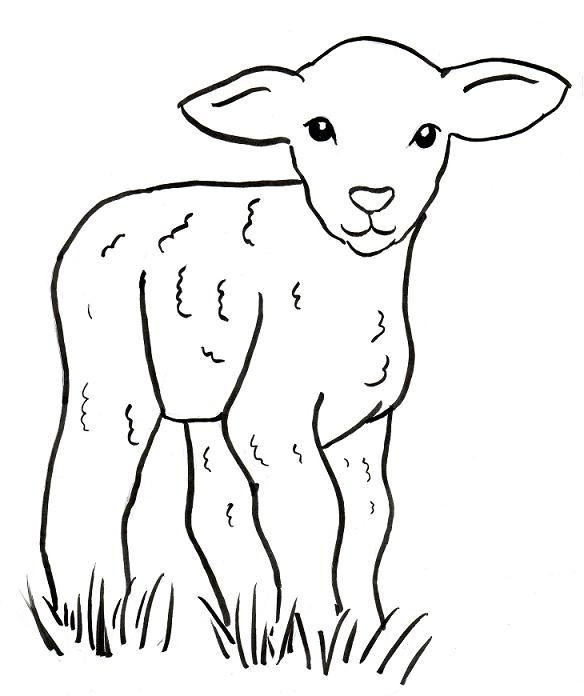 sheep drawing easy - Google Search