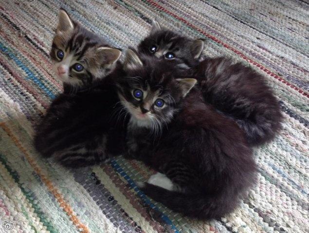Två kattungar