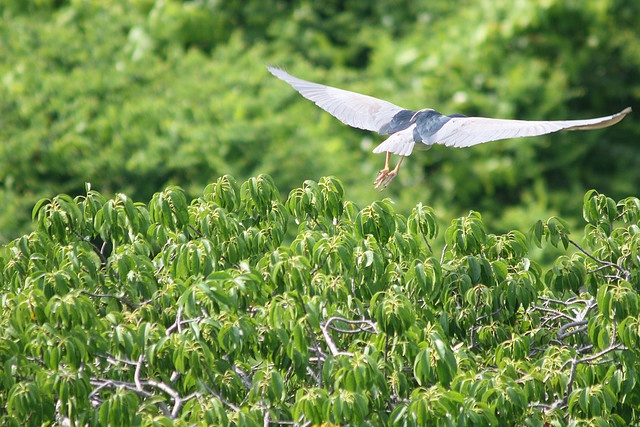 Burung Terbang yang tertangkap kamera di #pulaurambut #cagaralam