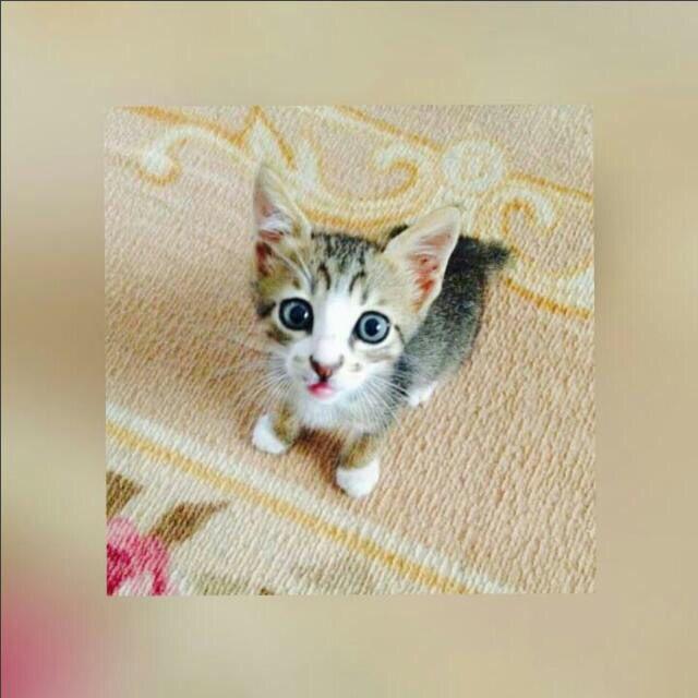 Baby cat 🐱🐱