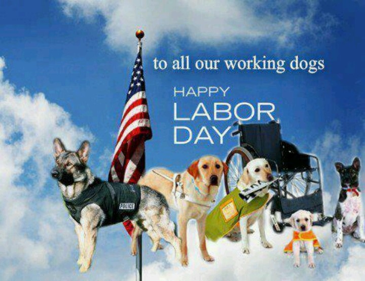 Happy Labor Day! | Animals | Dogs, Dog labor, Loyal dogs