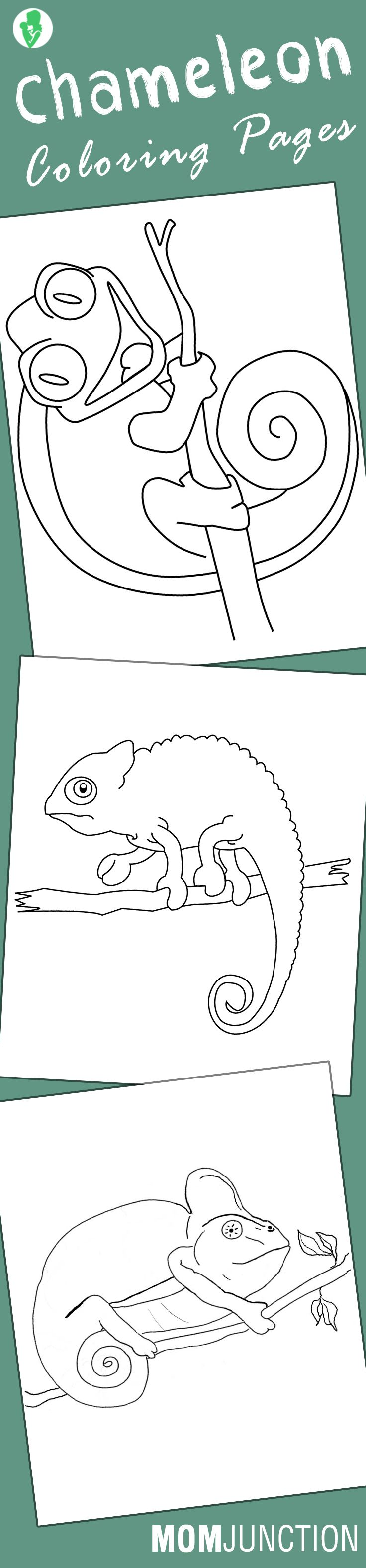 10 Best Chameleon Coloring Pages For Your Toddler