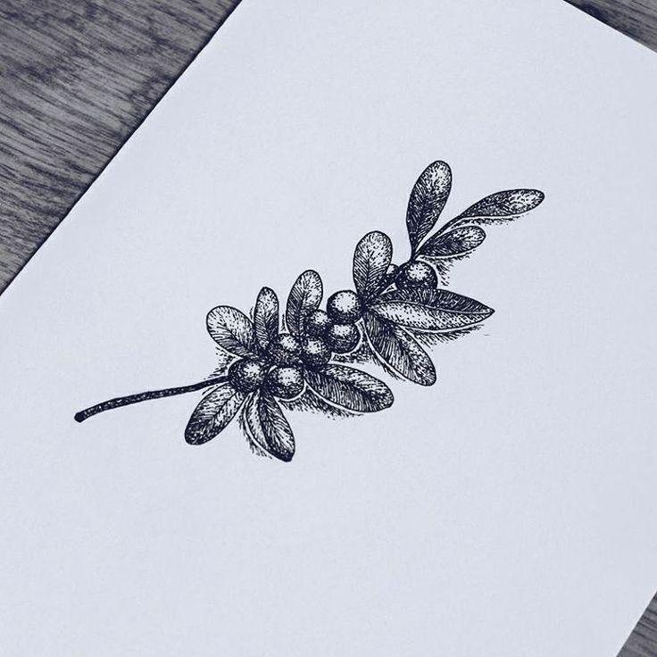 #dotwork #linework #nature #drawing #blackwork #iblackwork #art #ink #vsco #vscocam #vscopoland #illustration #sketch #mistletoe #draw #plant #microns #tattooart #tattoodesign #design