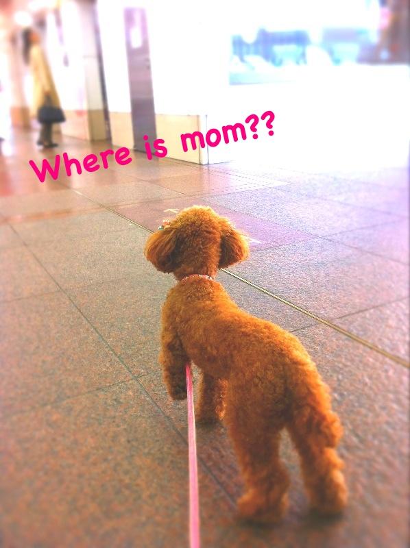 My sweeeeet dog♡