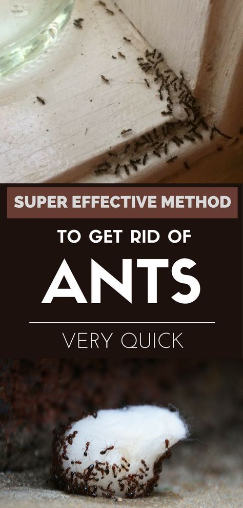 Super effective method to get rid of ants very quick.