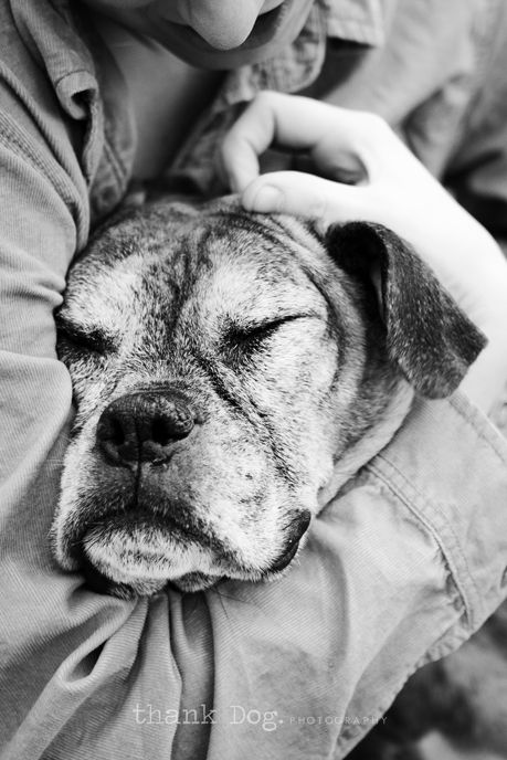 Old Boxer Reminds me of our 11 year old boxer Jackson who had to be put down. Still miss him.