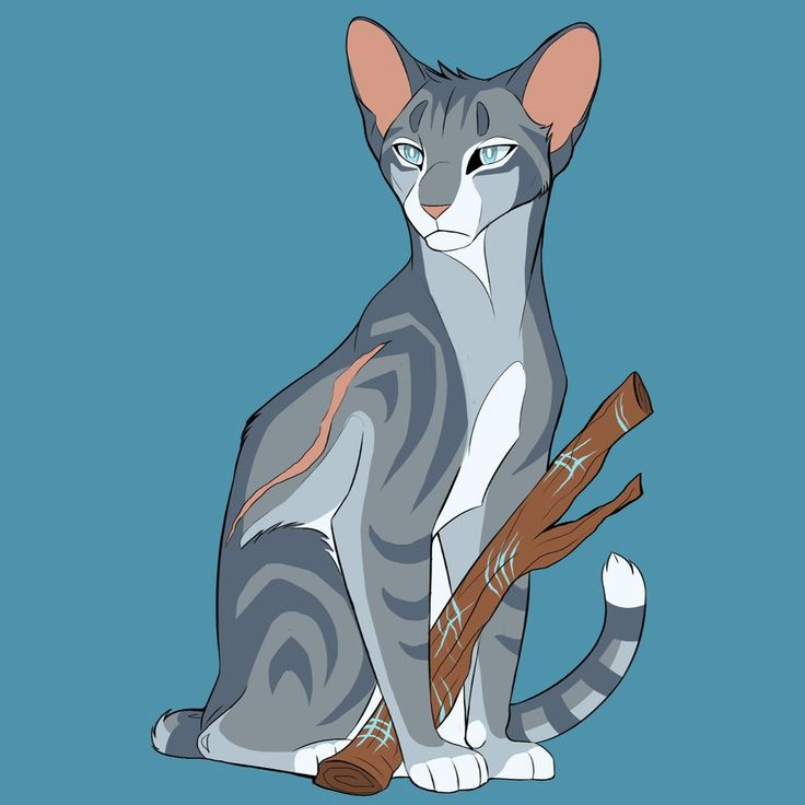 Warrior Cats Jayfeather 730 best images...