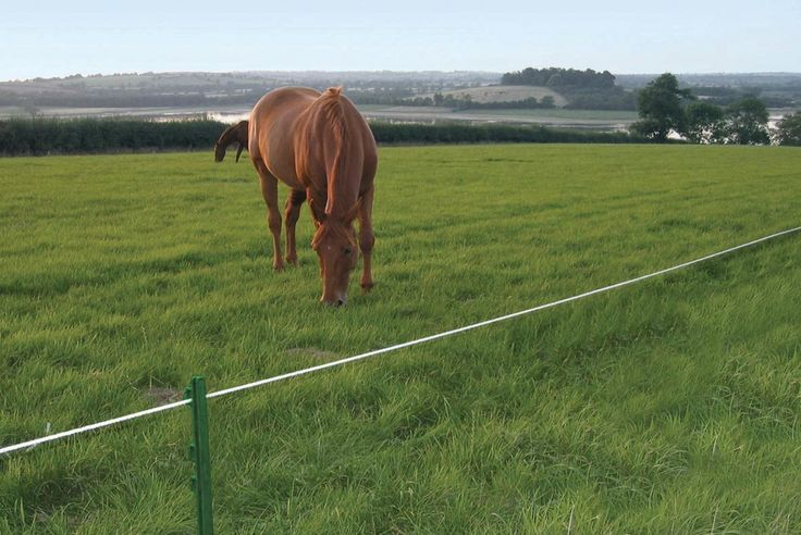 17 Best Ideas About Electric Fencing For Horses On