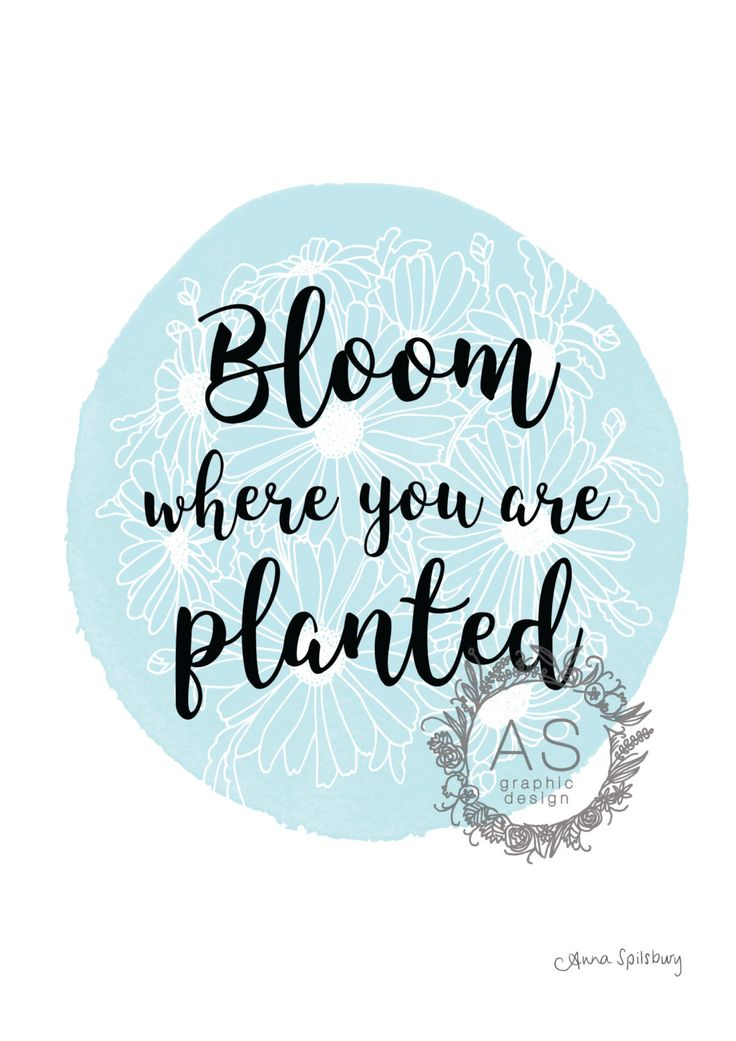Powder Blue Circle Bloom Where You Are Planted by AnnaSpilsburyDesign on Etsy https://www.etsy.com/au/listing/484387467/powder-blue-circle-bloom-where-you-are