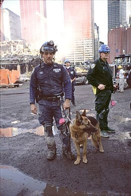 APPOLLO     Appollo and his handler, Peter Davis, were called in to assist with the rescue operations after the September 11 terror attacks. They arrived at the World Trade Center site fifteen minutes after the attack, making Appollo the FIRST search and rescue dog to arrive at the site after the collapse of the World Trade Center.    At one point, Appollo was almost killed by flames and falling debris. However, he survived, having been drenched after falling into a pool of water just before…