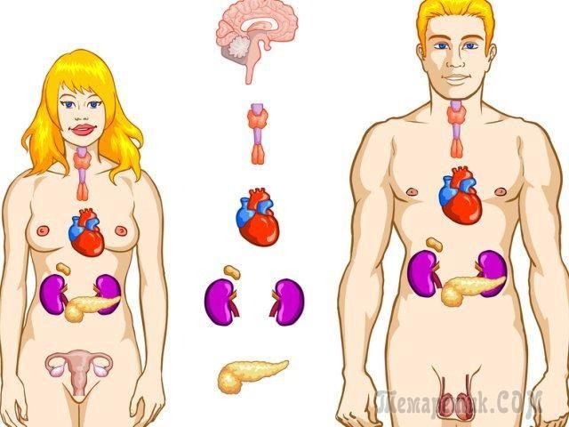 Еще каких-то 100 лет назад человечество ничего не знало о гормонах, а значит, совершенно не учитывало их влияние на здоровье человека. В наше время все кардинально поменялось. Сегодня каждый врач, да ...