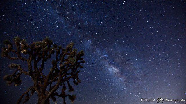 Joshua Tree Under the Milky Way on Vimeo