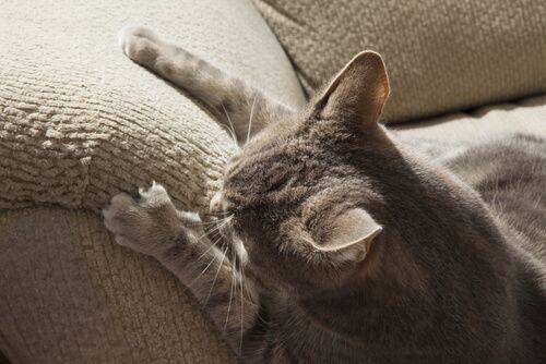Es normal que un gato arañe los muebles. Todos lo hacen. No obstante, hay forma de evitarlo. Te damos unos tips para que lo consigas.